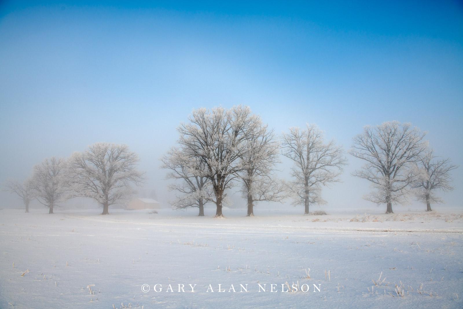 Rime ice on oak savannah, Chisago County, Minnesota
