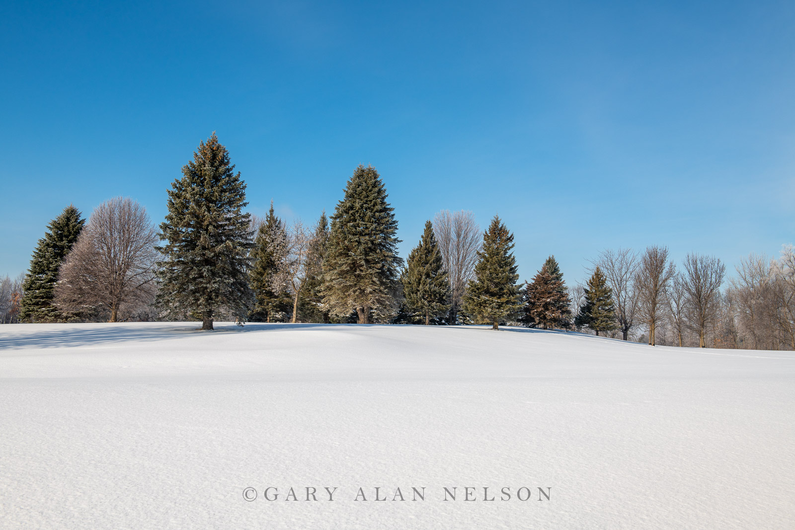 Fresh snow and rime ice in woods, Chisago County, Minnesota