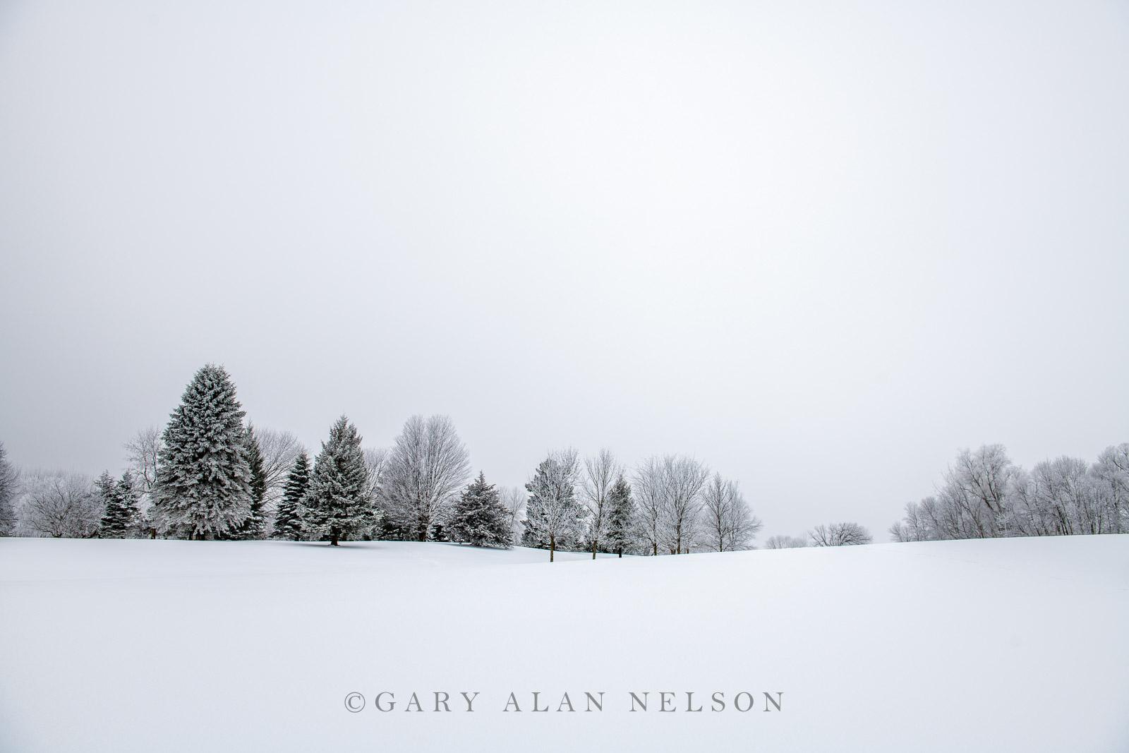 Rime ice and fog on woods and prairie, Minnesota