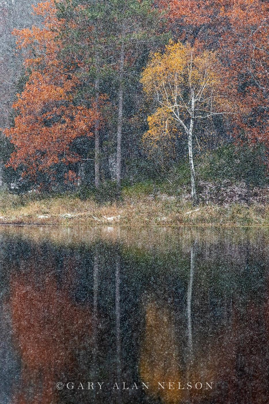 Autumn snowfall on Bull Lake, Allemansratt Park, Lindstrom, Minnesota