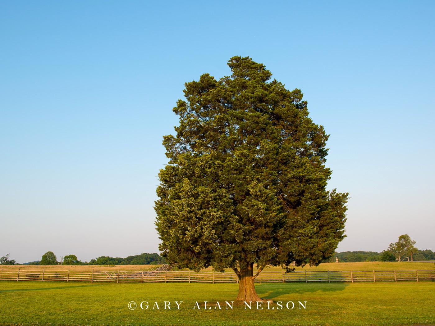 gettysburg, maryland, civil war, photo