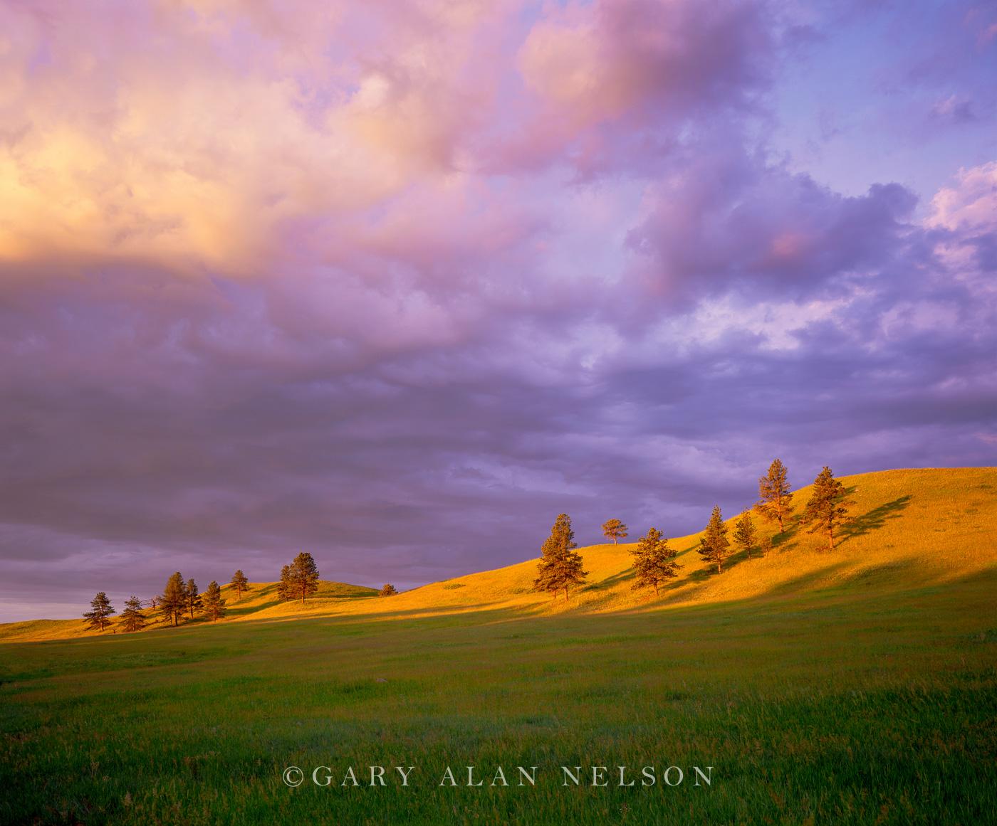 Wind Cave National Park, South Dakota, light, photo