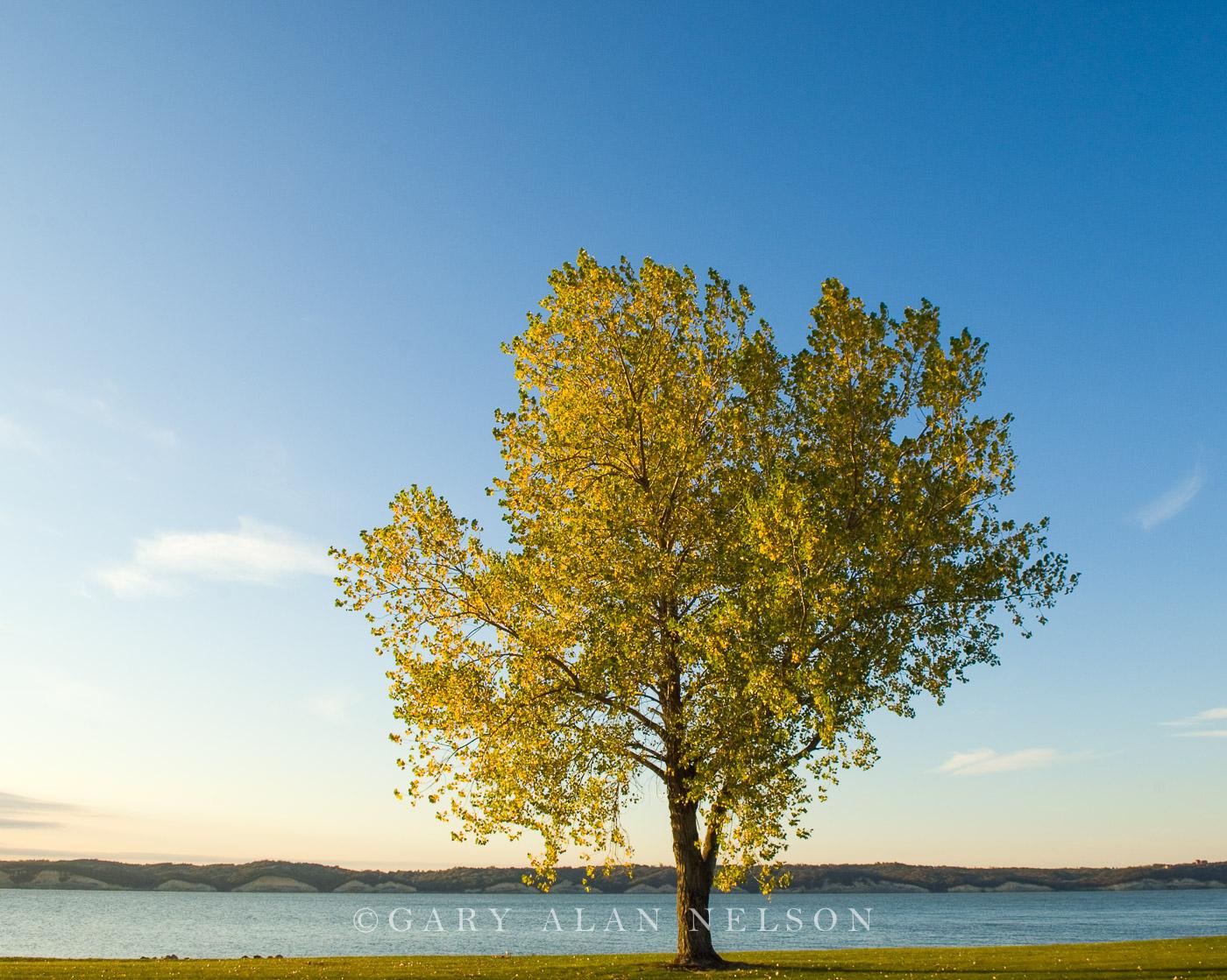 Missouri river, national recreation area, tree, lake, photo
