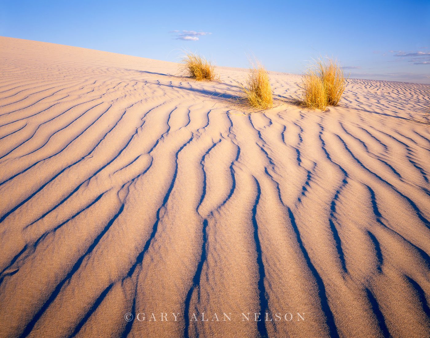 Guadalupe National Park, Texas, dunes, grasses, sand dunes, photo