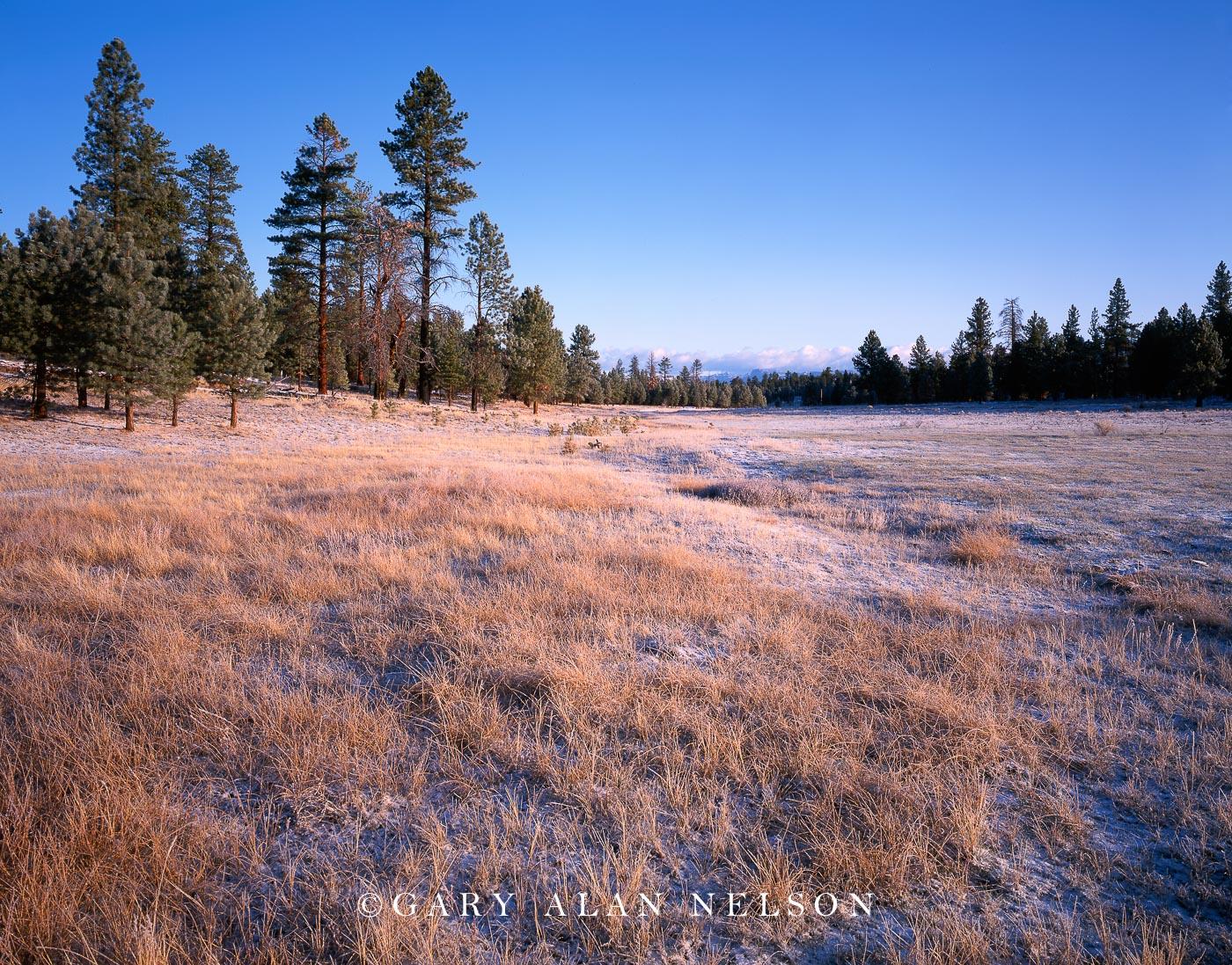 Bryce Canyon National Park, Utah, prairie grass, pines, photo