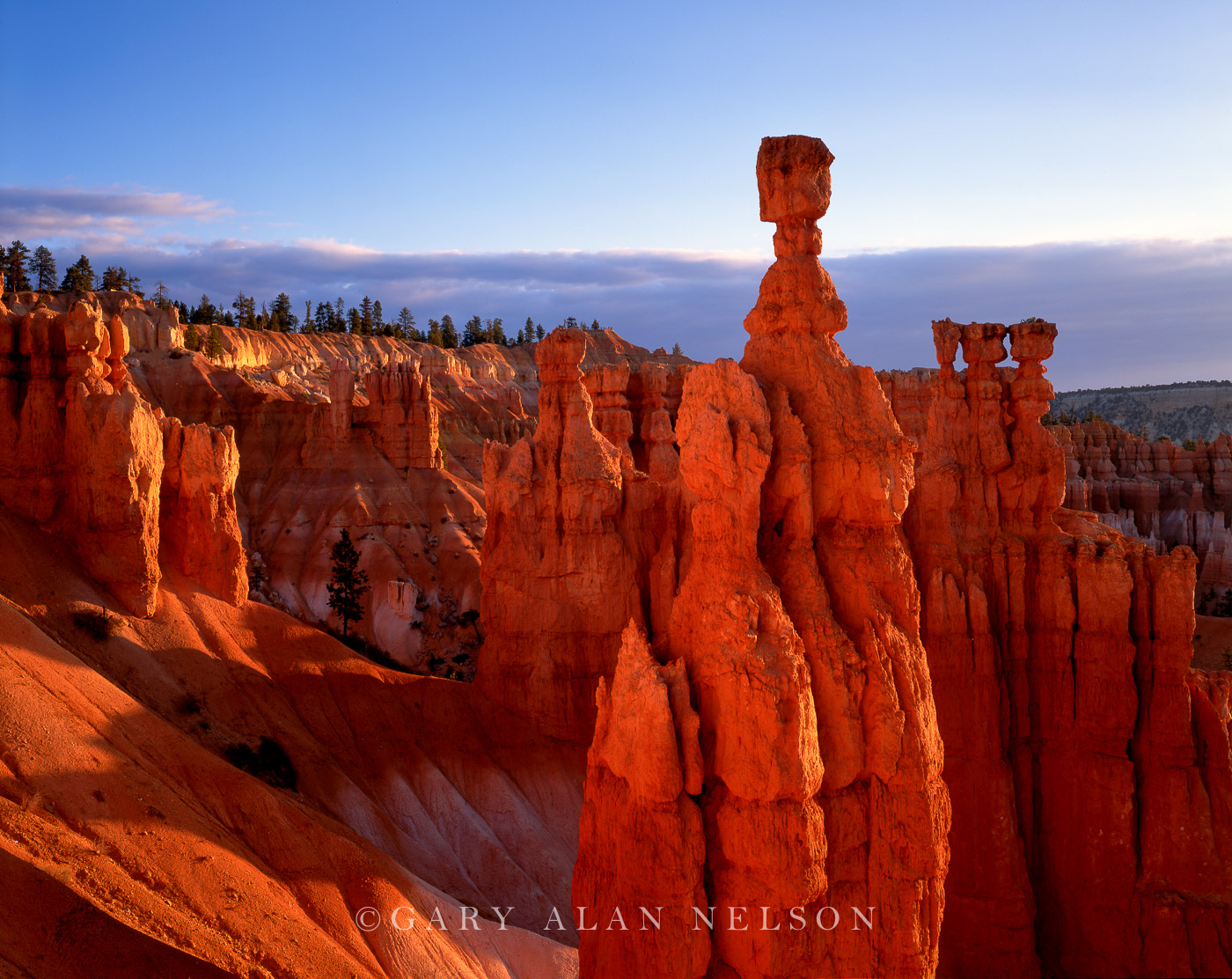 ... : Bryce Canyon National Park, Utah : Gary Alan Nelson Photography