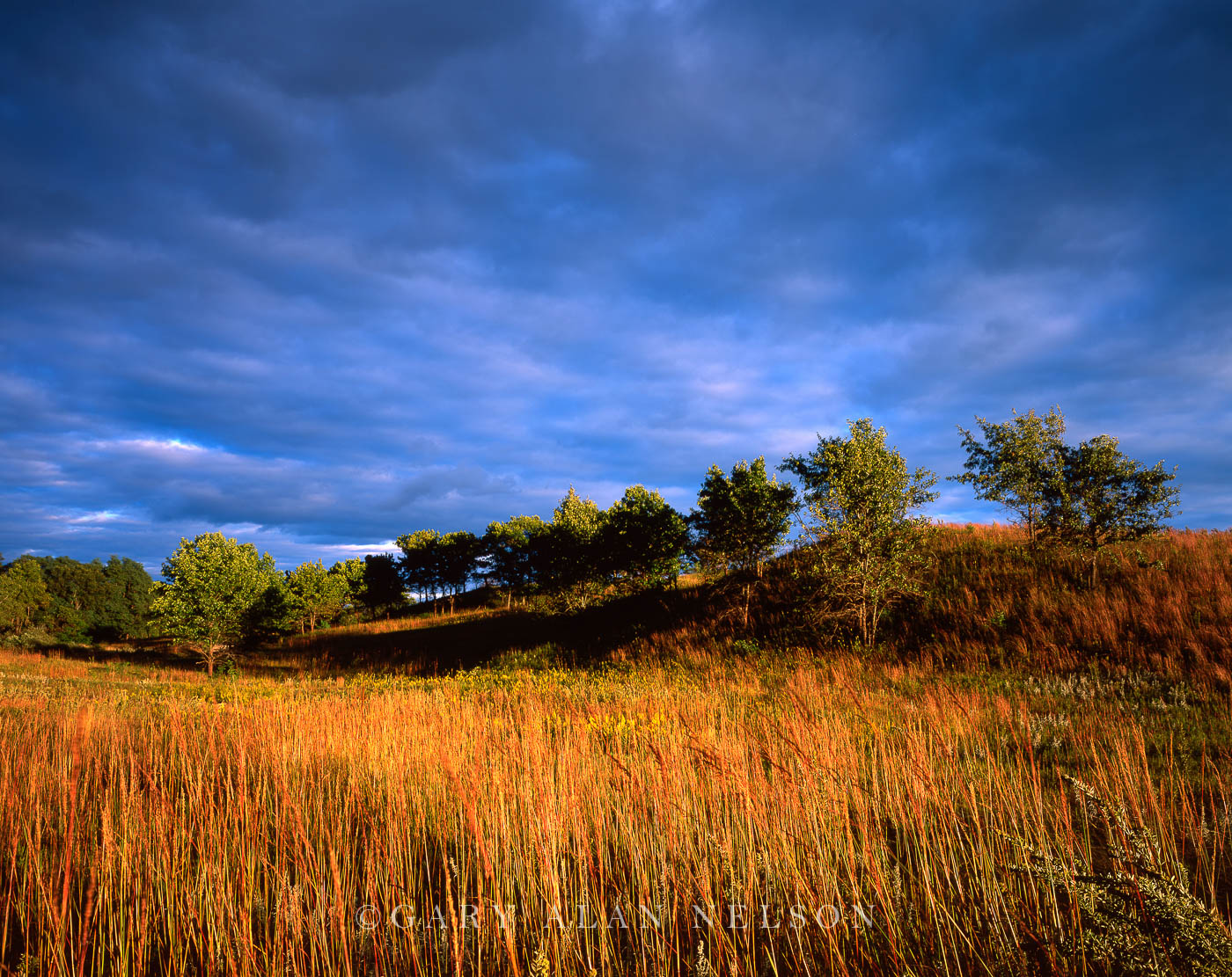 Trempealeau National Wildlife Refuge, Wisconsin, prairie grasses, photo